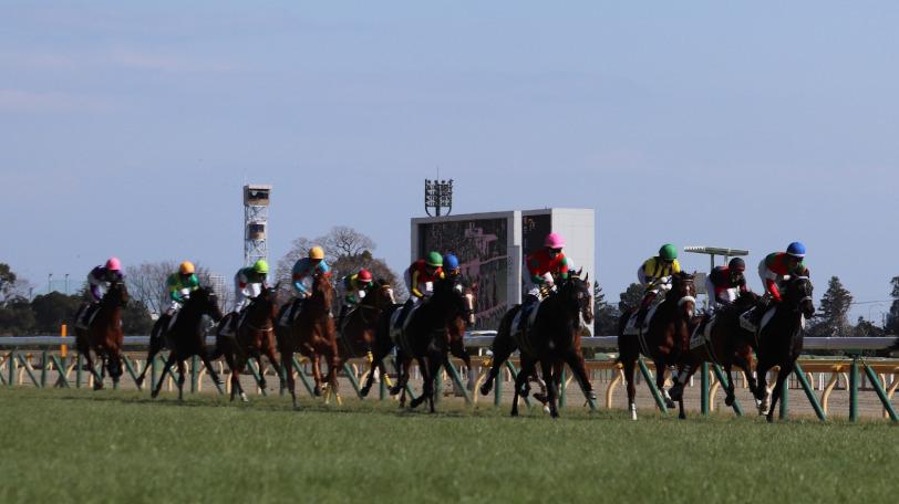 東京競馬場のコースを駆ける馬群Ⓒ三木俊幸