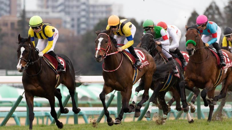 【動画あり】4強に待ったをかける馬とは?東大・京大の大阪杯の予想は?②―SPAIAちゃんねる