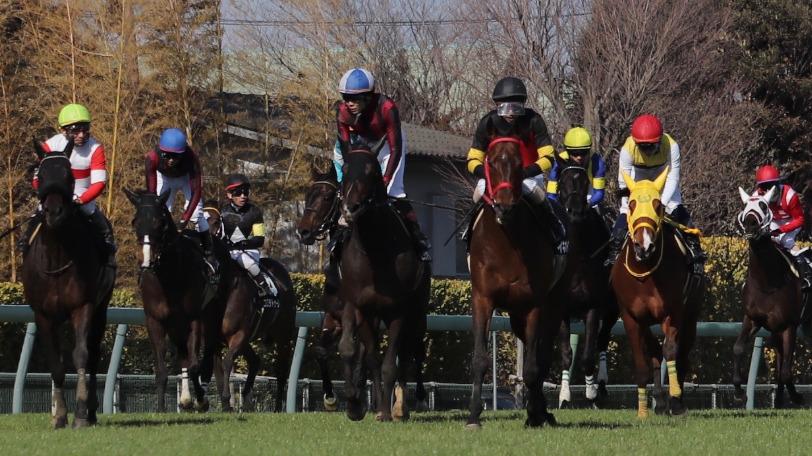 レース後の馬群Ⓒ三木俊幸