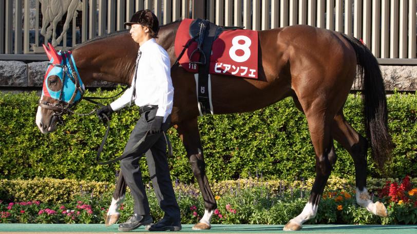 【朝日杯FS】今年の阪神はスピード勝負だ 京大競馬研の本命は函館2歳王者の快速馬