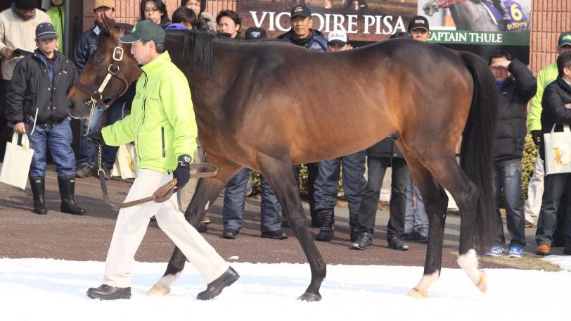 2019年種牡馬リーディングトップのディープインパクトⒸ明石智子